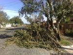 Setor Ambiental alerta sobre as podas em árvores